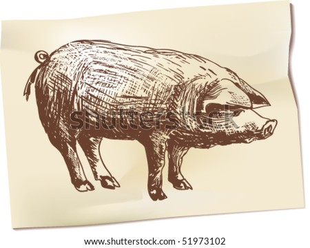 Pen drawing depicting a pig - stock vector