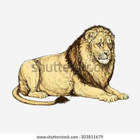 Pencil drawing of a lying lion  - stock vector