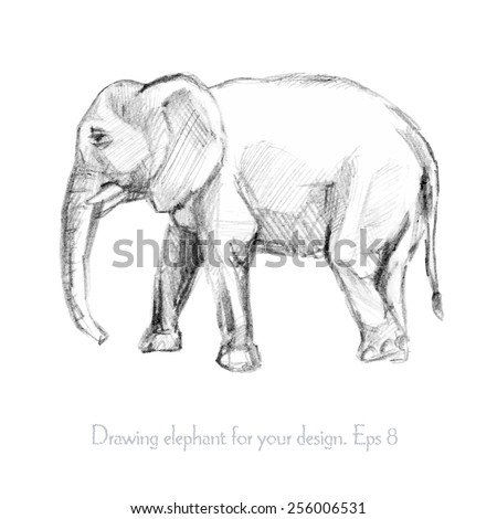 Pencil sketch of an elephant vector illustration