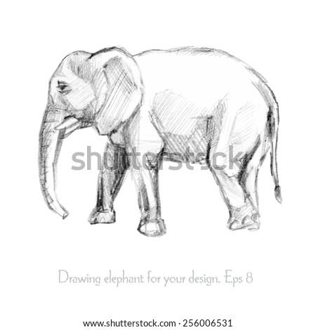 Pencil sketch of an elephant. Vector illustration - stock vector