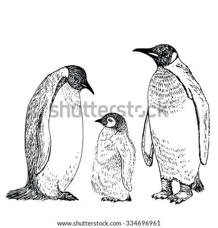 Penguin sketch. Hand drawn vector illustration. - stock vector