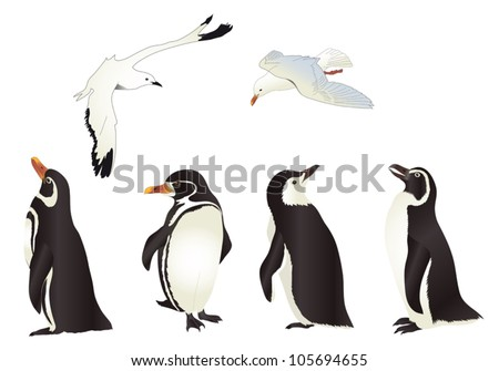 Penguins and Seagulls with simple gradients isolated on white background - stock vector