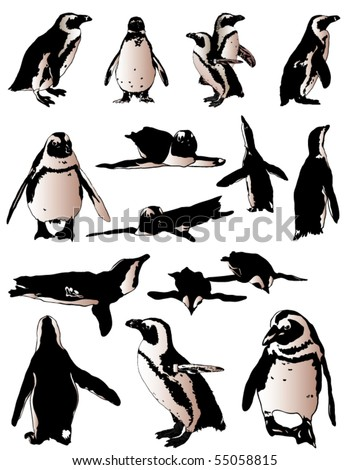 penguins collection - stock vector