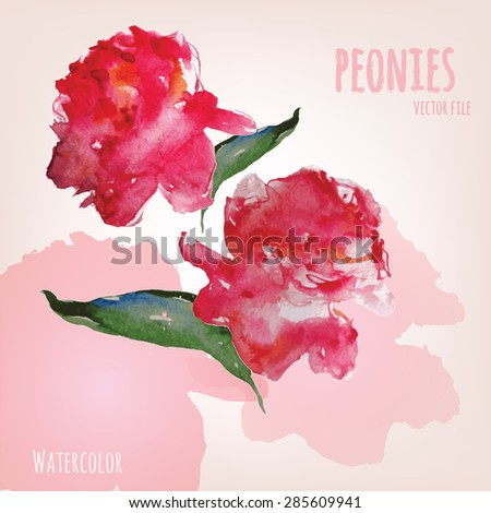 Peonies painted watercolour traced vector illustration art. - stock vector