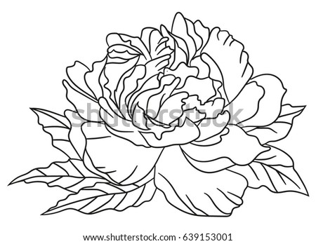 Peony flower black white graphics loved stock vector hd royalty peony flower black and white graphics loved to tattoo vector illustration mightylinksfo