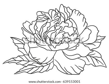 Peony flower black white graphics loved stock vector 639153001 peony flower black and white graphics loved to tattoo vector illustration mightylinksfo
