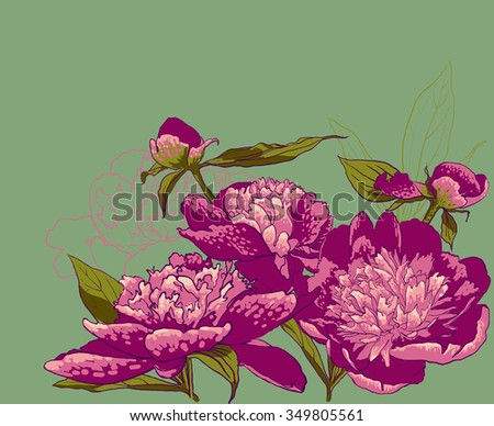 Peony flowers. vector llustration of handdrawing  beautiful Peonys