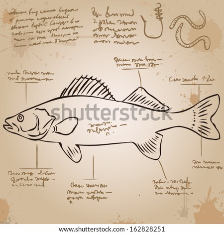 Perch. Vintage picture with explanations in an unknown language. Old paper, ink stains. - stock vector
