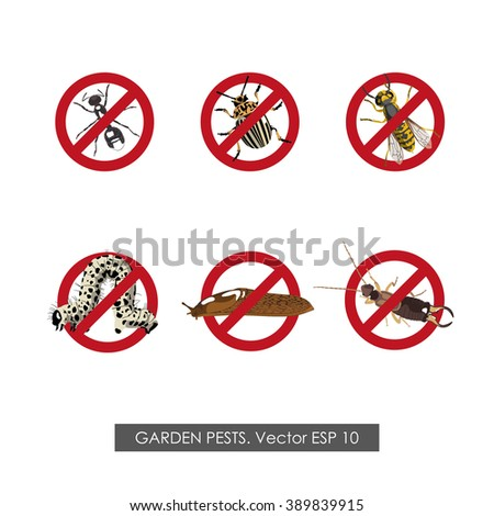 Pest control. Set of prohibition signs on white background. Vector illustration - stock vector