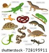 pet reptiles and amphibians...