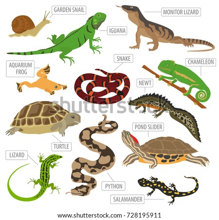 Salamander Stock Images Royalty Free Images Amp Vectors