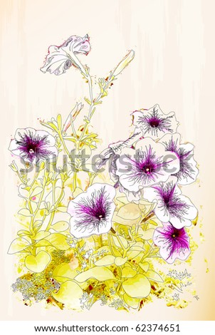 Petunias flowers. Chinese style illustration - stock vector