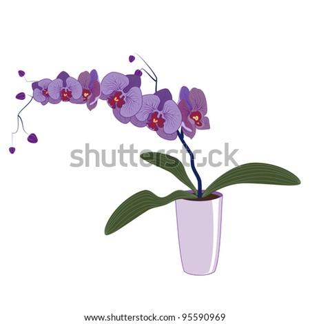 Phalaenopsis orchid blooming in a pot - stock vector