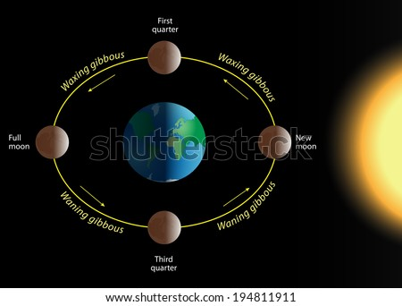 phase of the moon. The relation of the phases of the Moon with its revolution around Earth. Vector diagram - stock vector