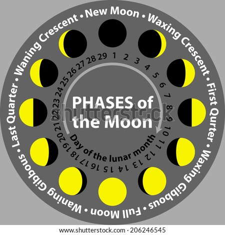 Phases of the Moon with days of lunar month - stock vector