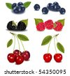 Photo-realistic vector illustration. Group of berries. - stock vector