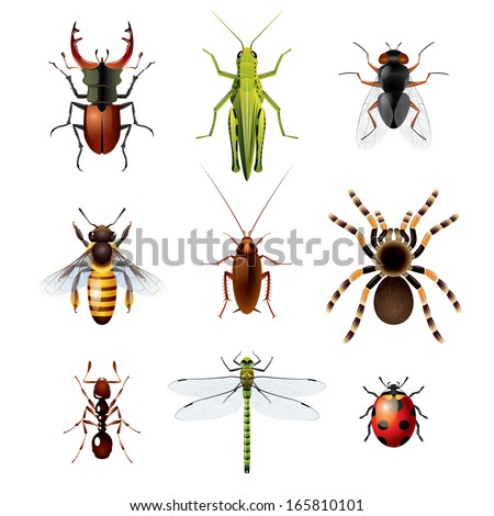 Photo-realistic vector illustration of nine colorful insects - stock vector