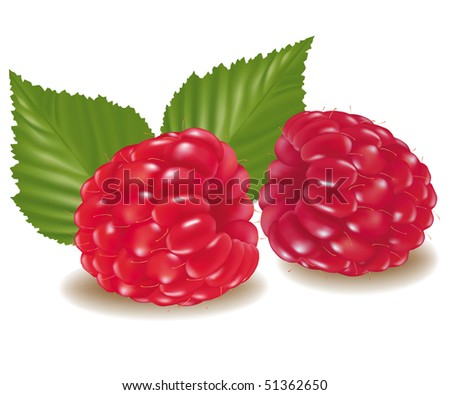 Photo-realistic vector illustration. Two raspberries with leaves.