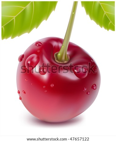 Photo-realistic vector. Ripe cherry with water drops and leaves.