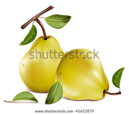 Photo-realistic vector. Ripe pears with water drops.