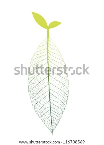 Photosynthesis of bud - stock vector