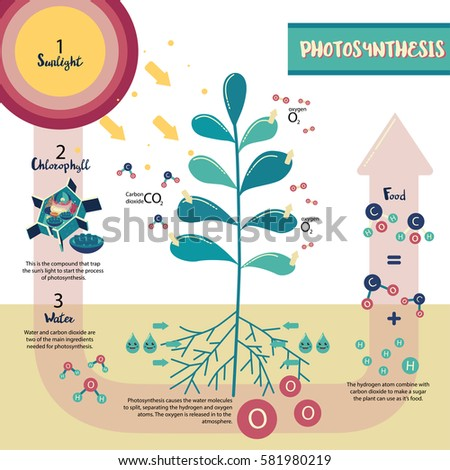 Photosynthesis diagram stock images royalty free images vectors photosynthesis process diagram illustration vector design ccuart Gallery