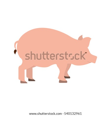 pig farm animal isolated icon vector illustration design