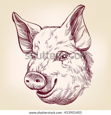 pig hand drawn vector llustration realistic sketch