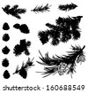 pine branches and cones black silhouettes - stock vector