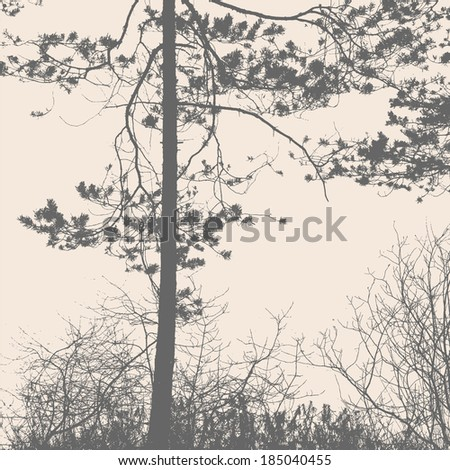 pine tree and branches silhouette. detailed vector illustration  - stock vector