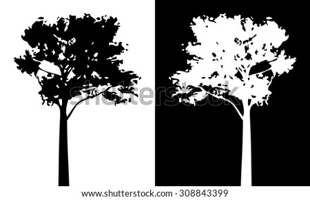 Pine tree vector silhouette.