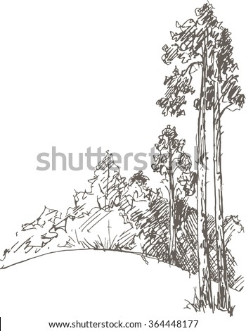 Pine trees and bushes drawing by pencil sketch of wild nature forest doodle