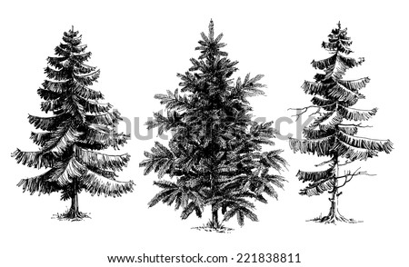 Pine trees / Christmas trees realistic hand drawn vector set, isolated over white - stock vector