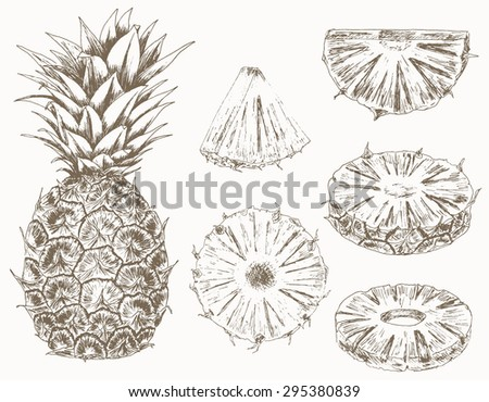 Pineapple set. Cut fruits. Hand drawn illustration of food sliced ingredients. Vector - stock vector