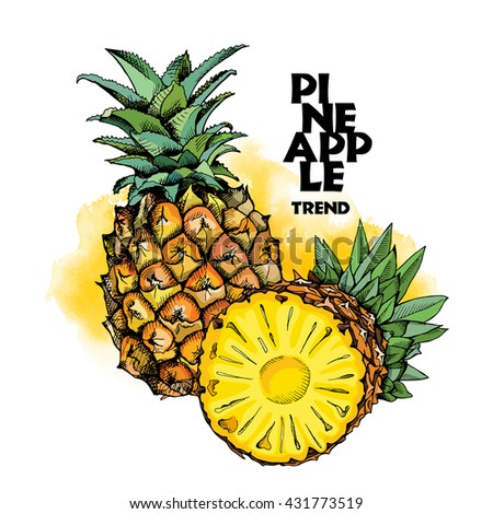 Pineapples fruit in color. Vector illustration.
