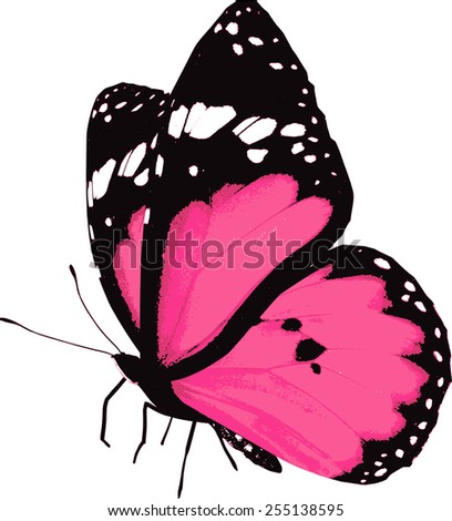 Pink butterfly, isolated on white - stock vector