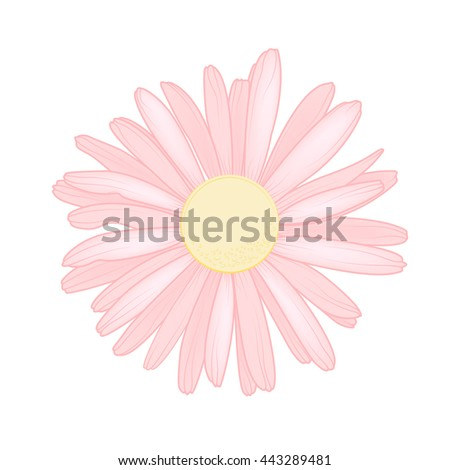 Pink chamomile daisy close up top view. Loves me loves me not flower. Isolated botanical floral design element. - stock vector