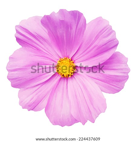 Pink daisy flower isolated on white background, vector illustration - stock vector