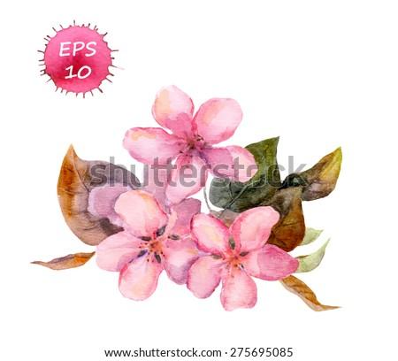 Pink fruit tree flower (apple, cherry, plum, sakura). Watercolour  vector art