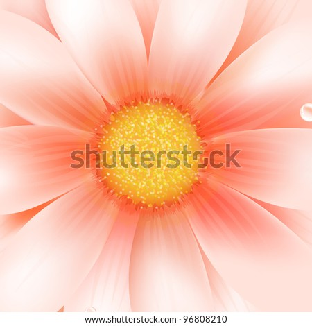 Pink Gerber Macro, Vector Illustration - stock vector