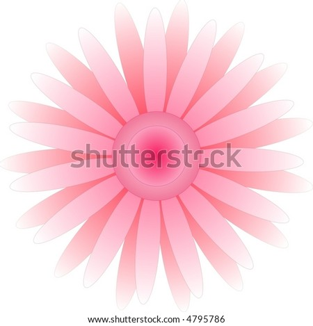 pink gerbera on white background - stock vector