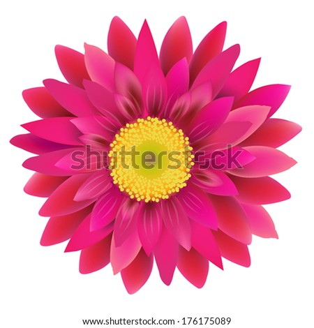 Pink Gerbera, With Gradient Mesh, Vector Illustration - stock vector