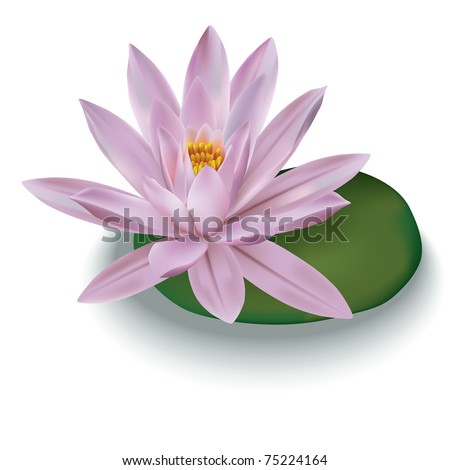 pink lotus isolated on a white background - stock vector