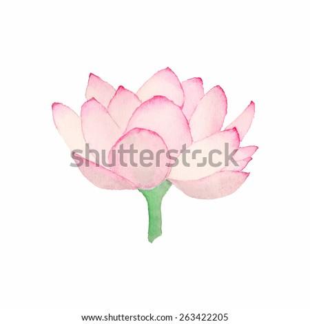 Pink Lotus Drawing Pink Lotus Watercolor Flower