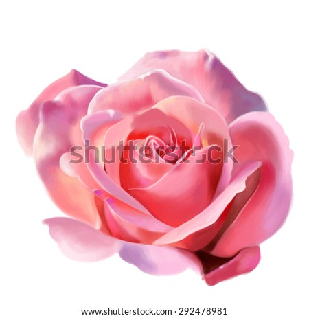 Pink rose isolated on white background, watercolor. Vector illustration - stock vector