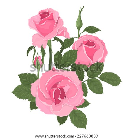 Pink roses bouquet with leaves. Isolated hand drawn vector - stock vector