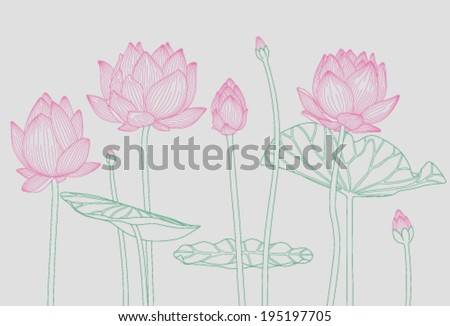 pink water lilies on a light gray background  - stock vector