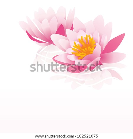 pink water lily vector illustration on white background - stock vector