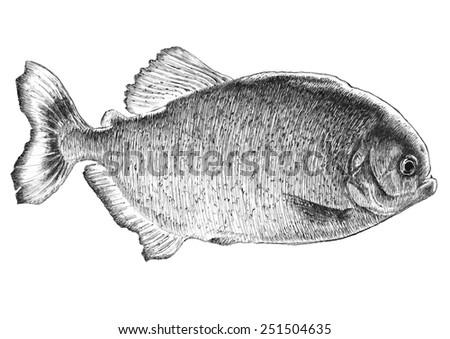 Piranha fish. Hand drawn. - stock vector