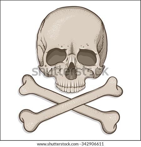 Pirate symbol - skull and two crossed bones. Human skull illustration in cartoon design. Print for textile.   - stock vector